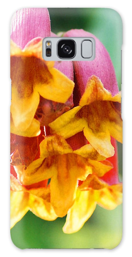Crossvine Galaxy S8 Case featuring the photograph Crossvine by Cynthia Syracuse