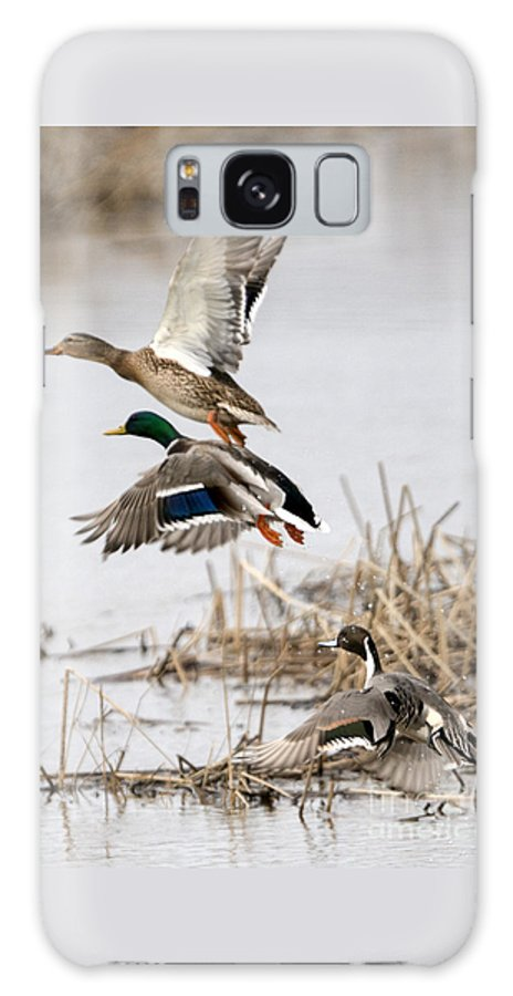 Ducks Galaxy Case featuring the photograph Crowded Flight Pattern by Mike Dawson
