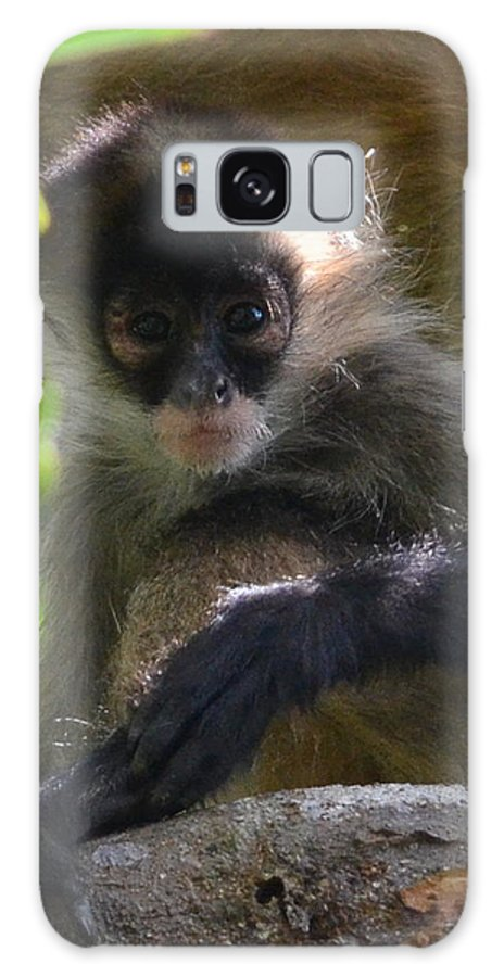 Monkey Galaxy S8 Case featuring the photograph Curiosity by Dave Wangsness