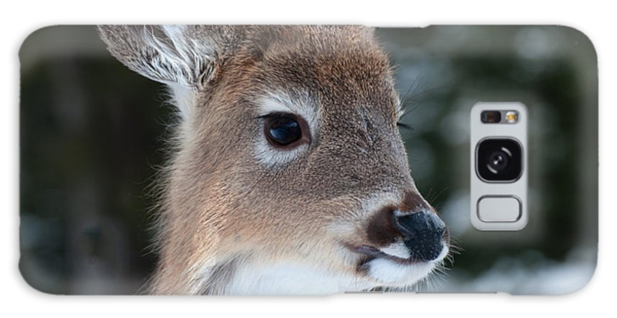 White Tailed Deer Galaxy S8 Case featuring the photograph Curious Fawn by Bianca Nadeau