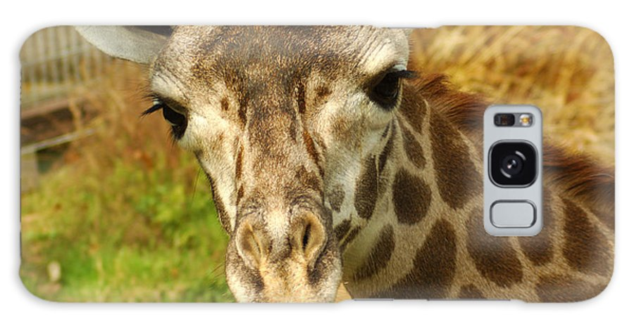 Hungry Galaxy S8 Case featuring the photograph Curious Giraffe by Micah May