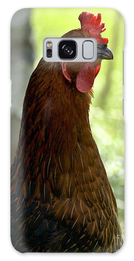Hen Galaxy S8 Case featuring the photograph Curious Hen by Cheryl Baxter