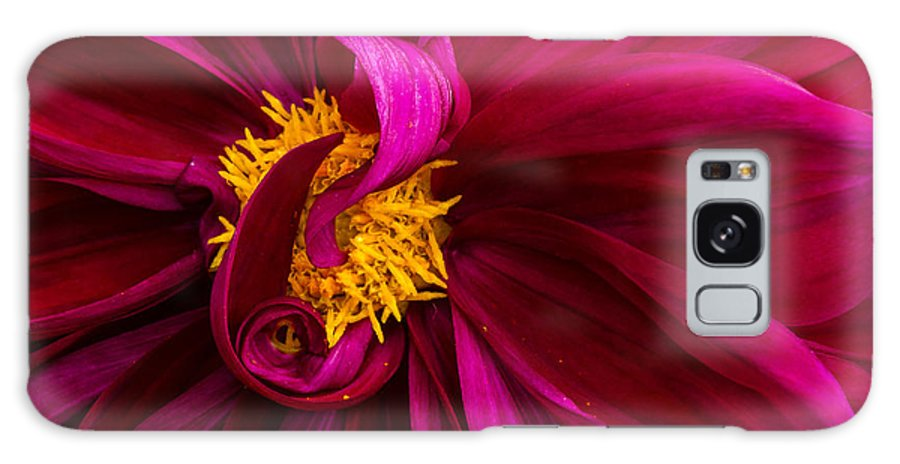 Dahlia Galaxy S8 Case featuring the photograph Curley by Jean Noren