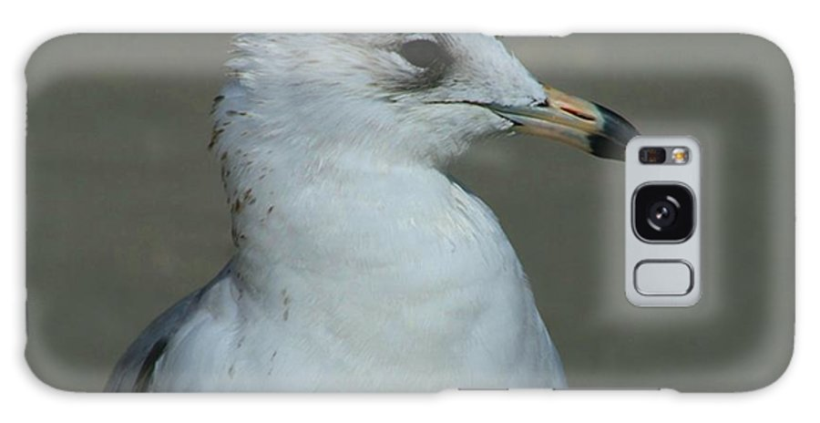 Seagull Galaxy S8 Case featuring the photograph Cute Profile by Beth Andersen