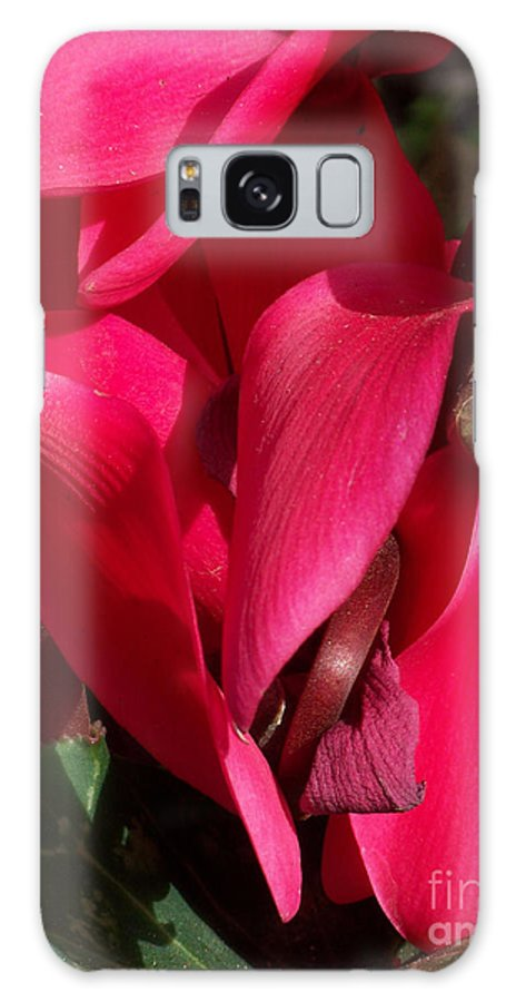 Flowers Galaxy Case featuring the photograph Cyclamen by Kathy McClure