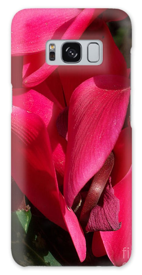 Flowers Galaxy S8 Case featuring the photograph Cyclamen by Kathy McClure