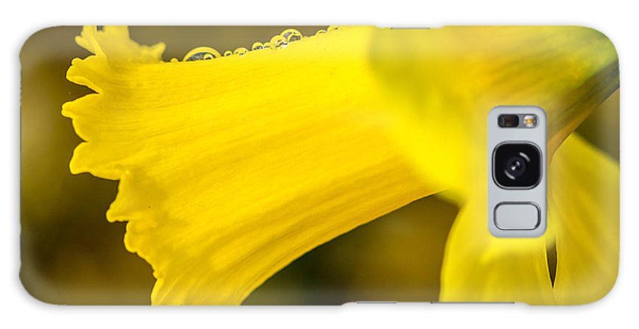 America Galaxy S8 Case featuring the photograph Daffodil Dewdrops by Susan Cole Kelly