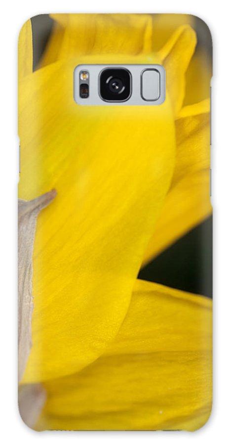 Daffodil Galaxy S8 Case featuring the photograph Daffodil Flower by Bernard Lynch