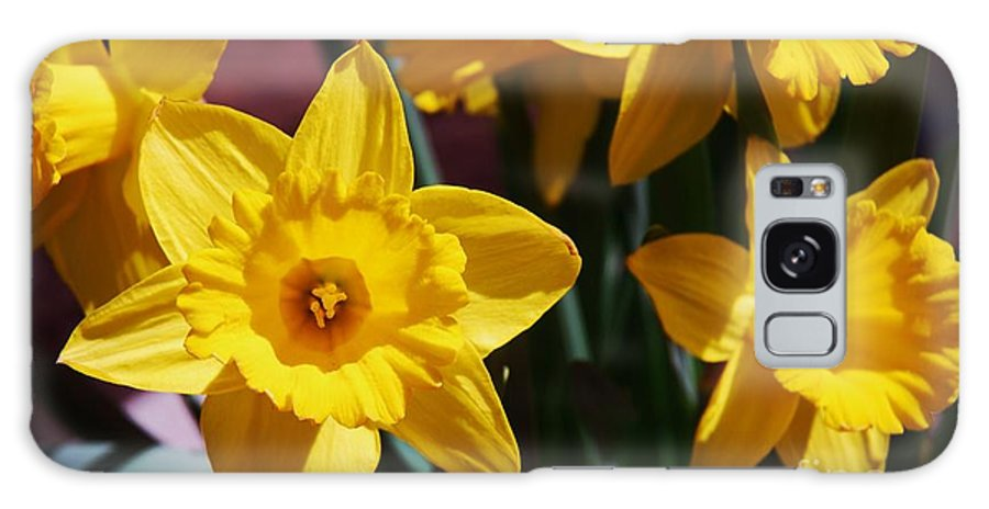 Daffodil Photography Spring Photography Stock Shot Photography Nature Photography Flora Photography Joyous Photographyclose Up Photography Canvas Print Metal Frame Greeting Card Easter Card Pesach Card Phone Case Art Throw Pillow Art Galaxy S8 Case featuring the photograph Daffodils by Marcus Dagan