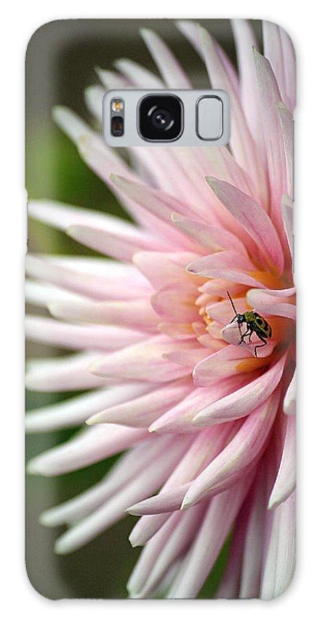 Greer's Garden Galaxy S8 Case featuring the photograph Dahlia Bug by Chris Anderson