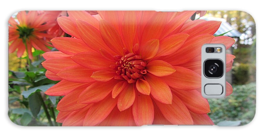 Flower Galaxy S8 Case featuring the photograph Dahlia 'melody Swing' by Robert Speziale