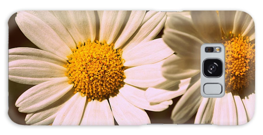 Flower Galaxy S8 Case featuring the photograph Daisies by Chevy Fleet