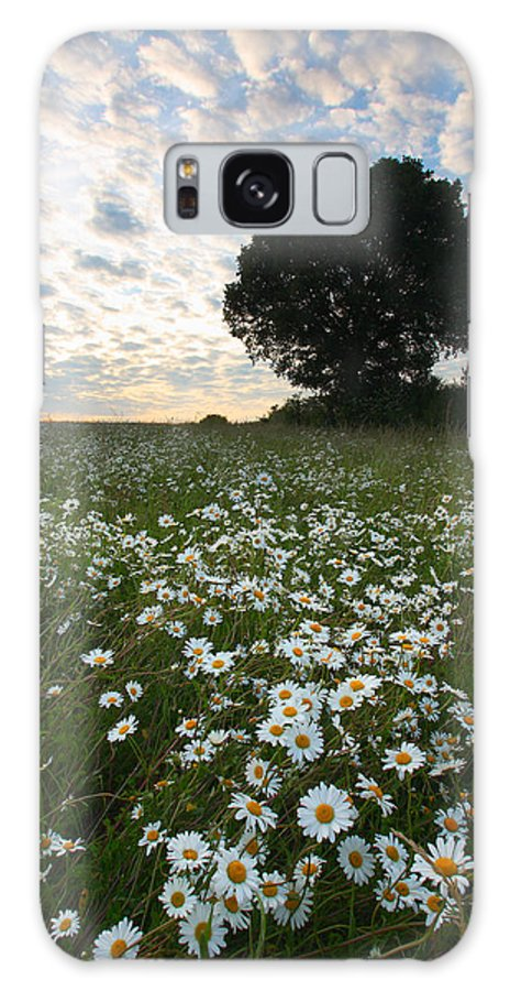Daisies Galaxy S8 Case featuring the photograph Daisies by Graham Custance