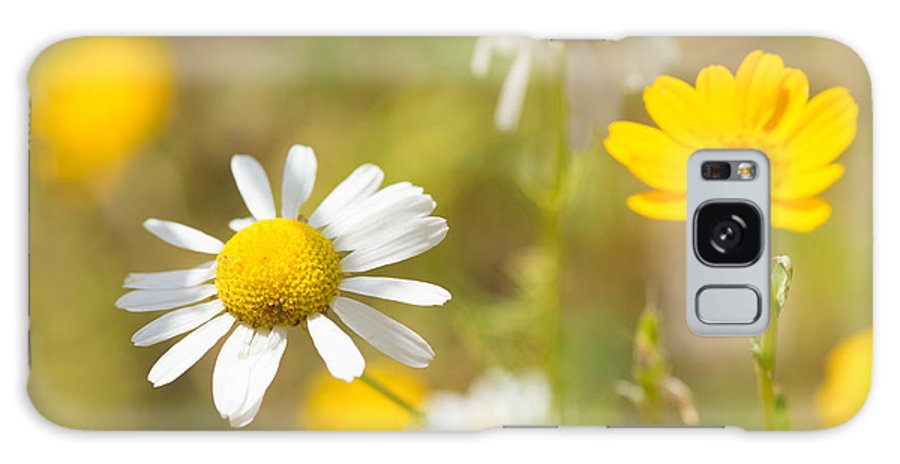 Daisies Galaxy S8 Case featuring the photograph Daisies On Summer Meadow by Matthias Hauser