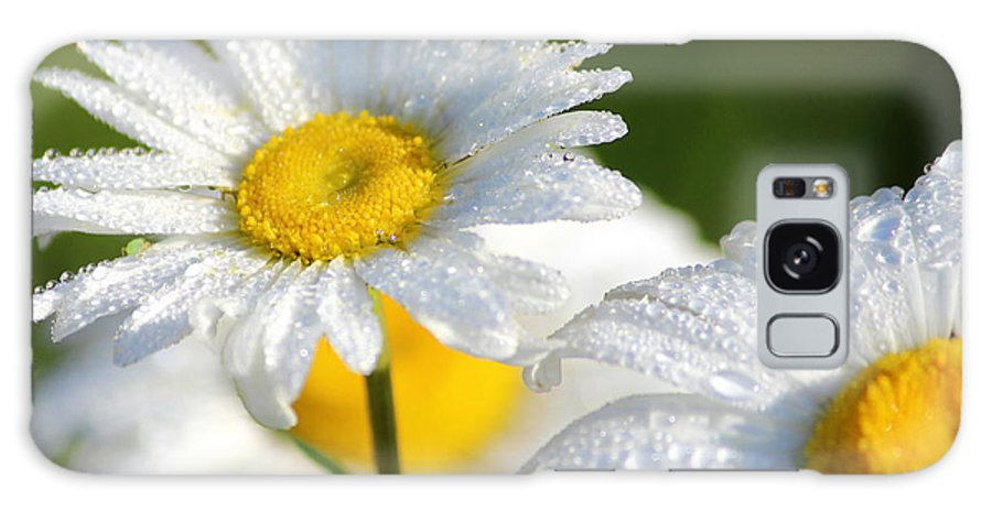 Daisies Nature Flower Summer Country Yellow White Shamik Photography Galaxy S8 Case featuring the photograph Daisies by Shamik Tobin