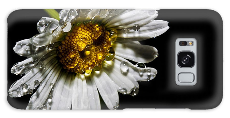 Flower Galaxy S8 Case featuring the photograph Daisy by Barry Chignell