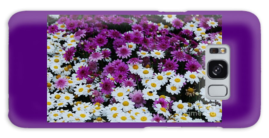 Nature Art Daisies Purple White Dublin Airport Flora Happy Flowers Travel Full Frame Floral Yellow Hearts Bouquet Ireland Canvas Print Metal Frame Poster Print Available On T Shirts Tote Bags Throw Pillows Pouches Coffee Mugs Shower Curtains And Phone Cases Galaxy S8 Case featuring the photograph Daisy Bouquet From Dublin by Marcus Dagan