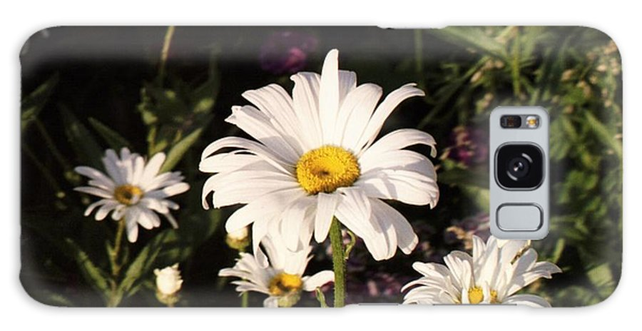 White Galaxy S8 Case featuring the photograph Daisy by Brandi Maher