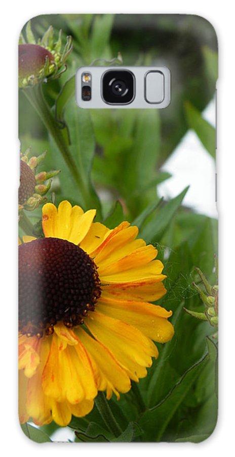 Daisy Galaxy S8 Case featuring the photograph Daisy Chain by Brian Boyle