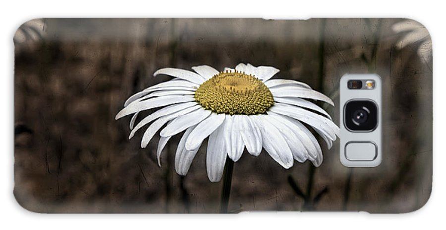 Flower Galaxy S8 Case featuring the photograph Daisy by Evie Carrier