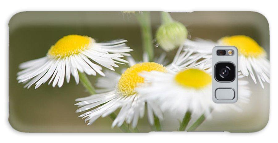 Daisy Fleabane Galaxy S8 Case featuring the photograph Daisy Fleabane by Bernard Lynch