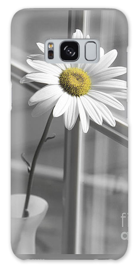 Daisy Galaxy S8 Case featuring the photograph Daisy In The Window by Diane Diederich