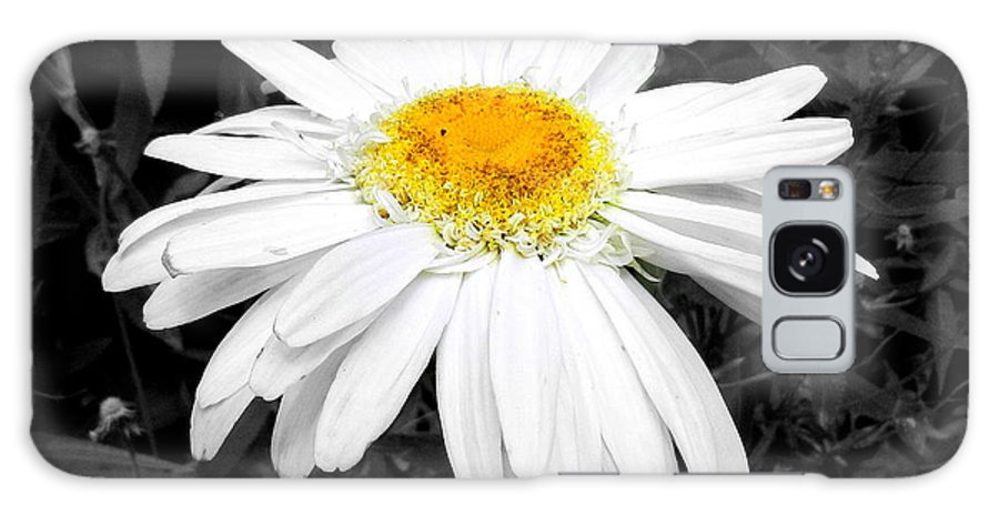 Flower Galaxy S8 Case featuring the photograph Daisy May by Sheri Copeland