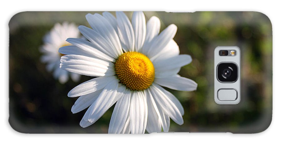 Daisy Galaxy S8 Case featuring the photograph Daisy by Pkm digital Photography