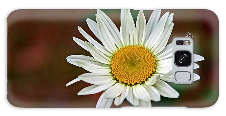 Flower Galaxy S8 Case featuring the photograph Daisy by Randy Shannon