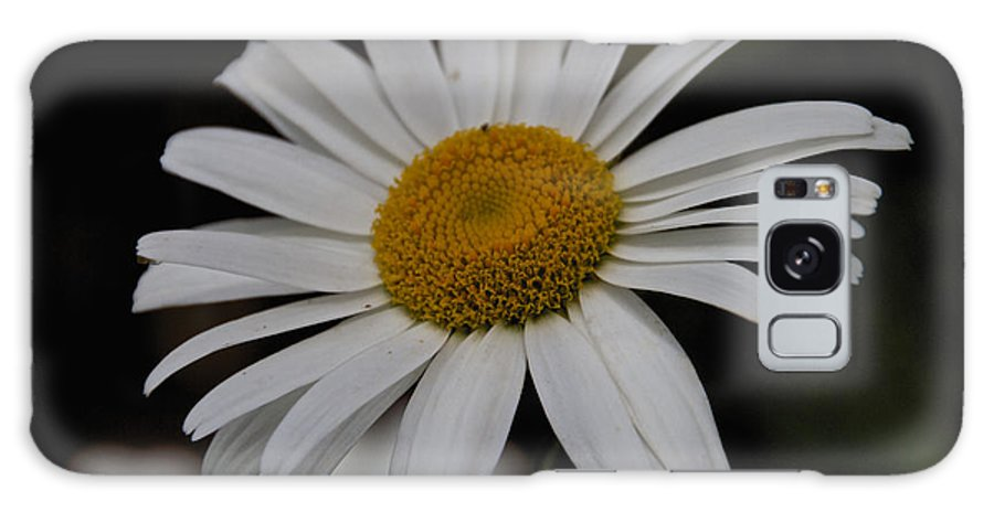 Field Galaxy S8 Case featuring the photograph Daisy by William Norton