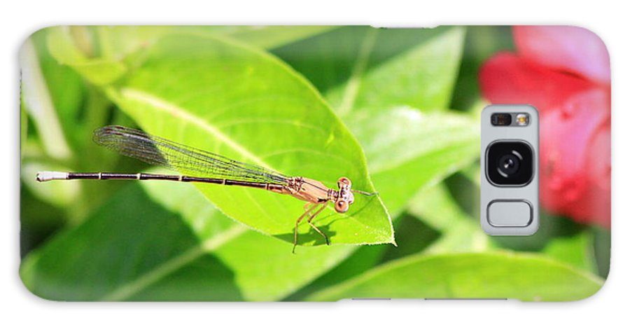 Damsel Fly Galaxy S8 Case featuring the photograph Dam-sel by Reid Callaway