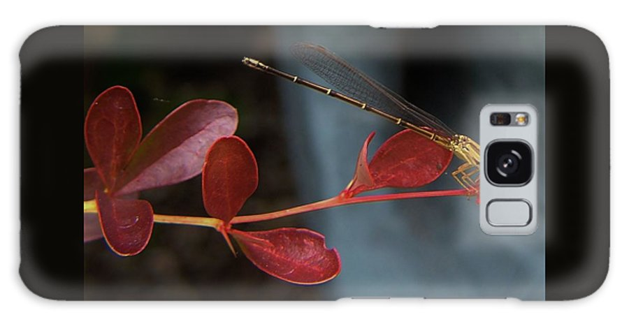 Damselfly Galaxy S8 Case featuring the photograph Damselfly On End Of Burning Bush Stem       Summer        Indiana by Rory Cubel