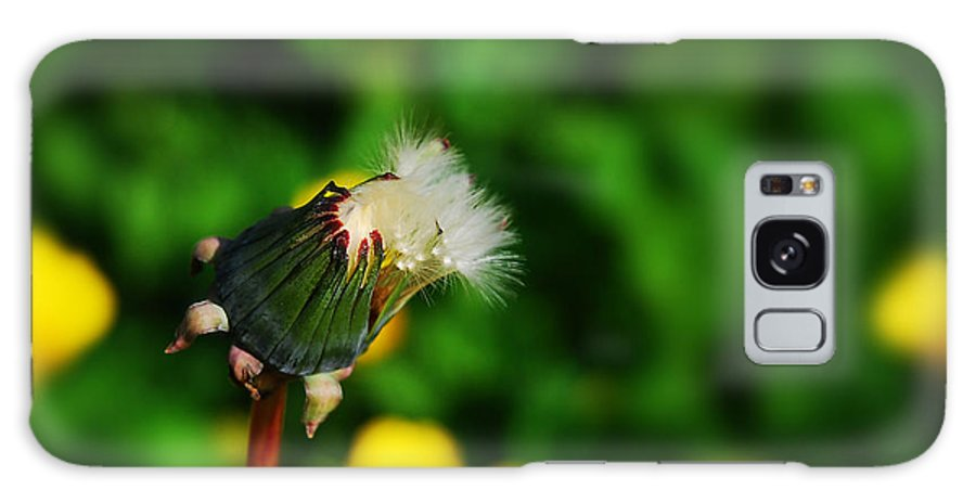 Dandelion Galaxy S8 Case featuring the photograph Dandelion In Spring by John Magnet Bell