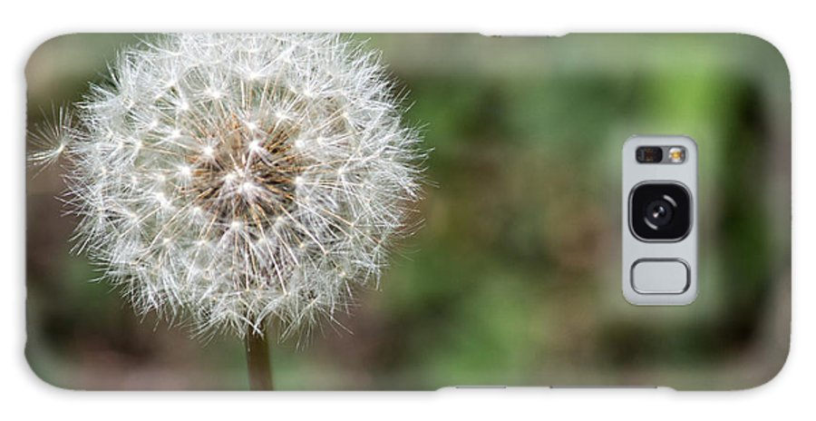 Dandelion Galaxy S8 Case featuring the photograph Dandelion by Terry Thomas