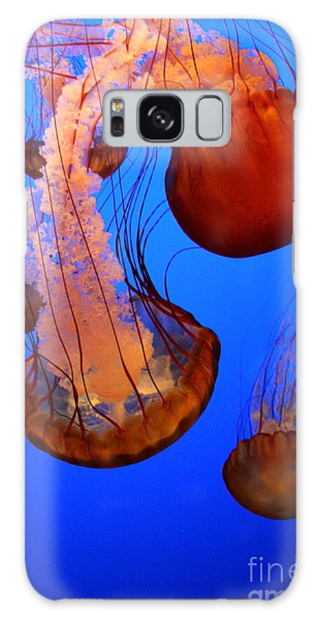 Man O War Galaxy S8 Case featuring the photograph Dangerous Ballet by Tracy Evans