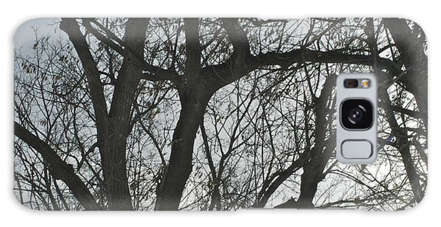 Trees Galaxy S8 Case featuring the photograph Dark And Deep by Joseph Yarbrough
