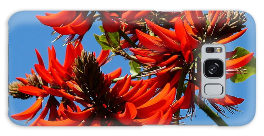 Bush Blossom Galaxy S8 Case featuring the photograph Dark Orange Coral Blossom by Jeff Lowe