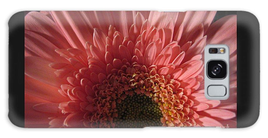 Flower Galaxy S8 Case featuring the photograph Dark Radiance by Ann Horn