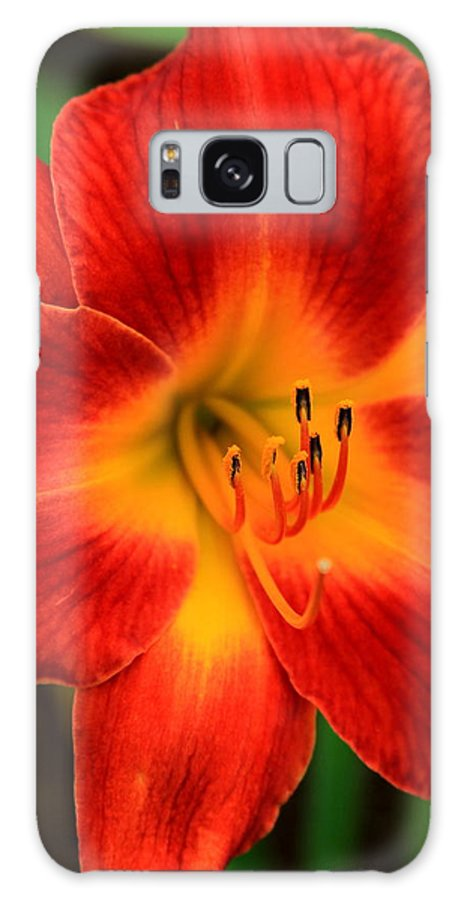 Reid Callaway Flower Galaxy S8 Case featuring the photograph Day Lily1 by Reid Callaway