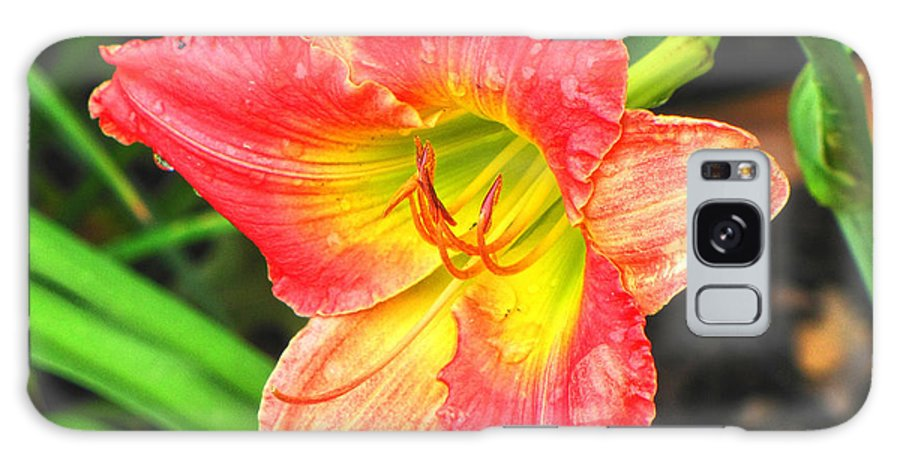 Daylily Galaxy S8 Case featuring the photograph Daylily by C H Apperson