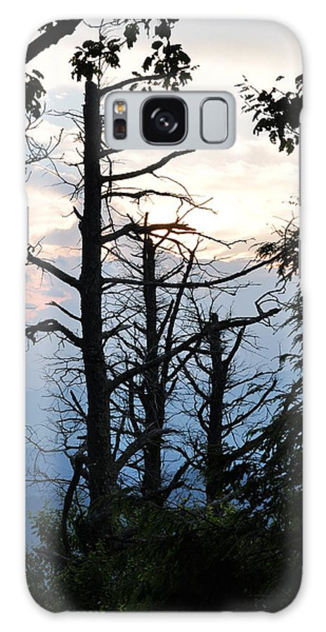 Nature Galaxy S8 Case featuring the photograph Dead Pines Along The Parkway by Sherri Quick
