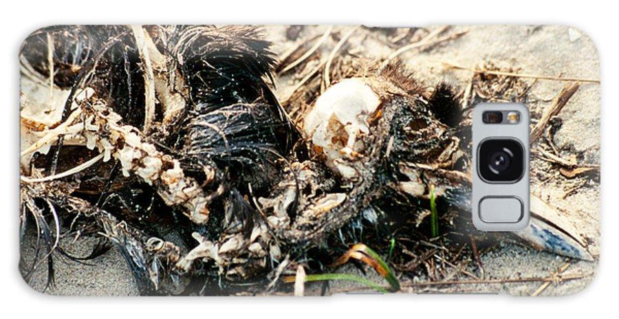Animal Galaxy S8 Case featuring the photograph Decomposing Dead Bird by Stephan Pietzko
