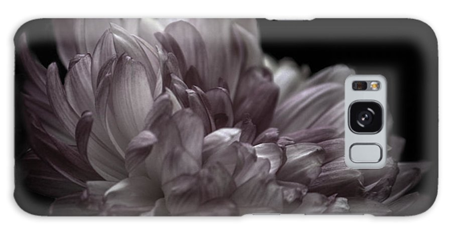 Bloom Galaxy S8 Case featuring the photograph Deeper Purple Dahlia by Josh Spidel