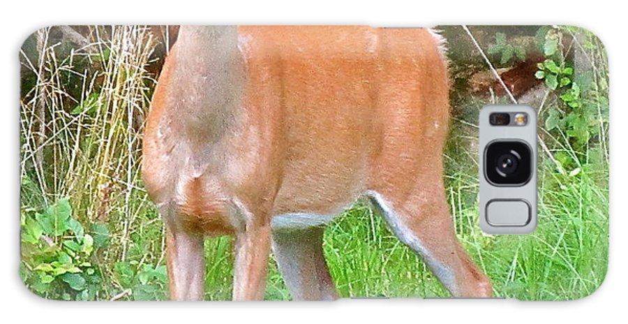 Deer Galaxy S8 Case featuring the photograph Deer 102 by Patsy Pratt