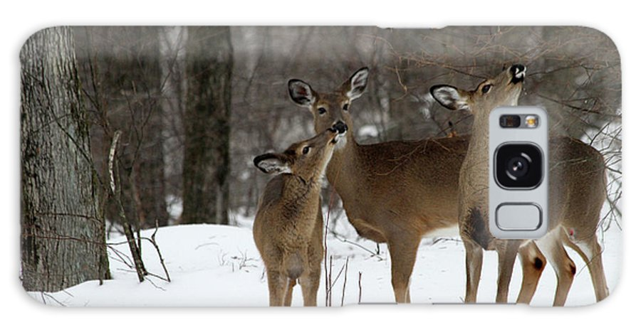 Deer Galaxy S8 Case featuring the photograph Deer Affection by Karol Livote