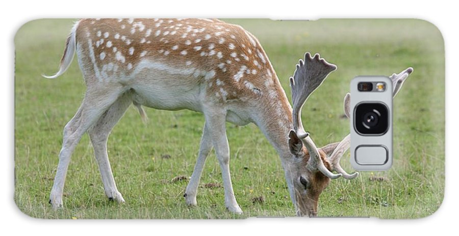 Deer Galaxy S8 Case featuring the photograph Deer Eating by Mark Severn