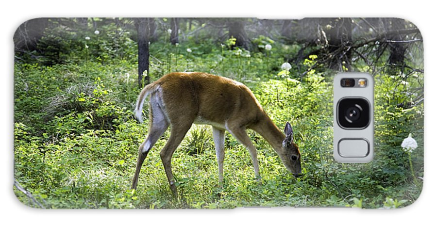 Deer Galaxy S8 Case featuring the photograph Deer In Sunlight Glen by Carol Barrington