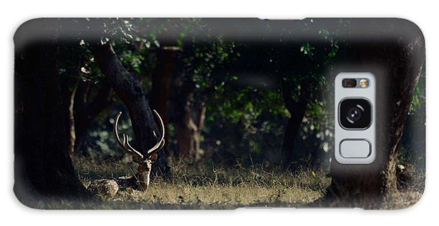 Deer Galaxy S8 Case featuring the photograph Deer Portrait by Naveen Krishnan