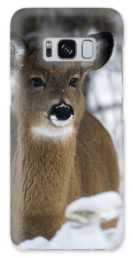 Deer Portrait Galaxy S8 Case featuring the photograph Deer Portrait by Nebojsa Novakovic