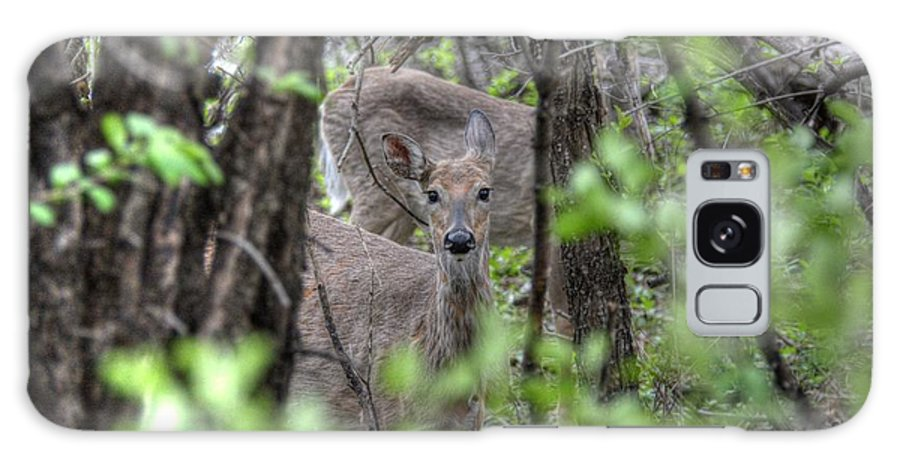 Deer Galaxy S8 Case featuring the photograph Deer Through The Trees by M Dale